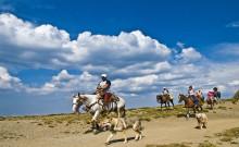 Cavalli e cani